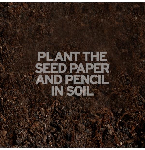 Crayon à mine avec semences de basilic